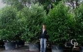 Prunus Laur  Extra 3,00 285l
