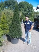 Taxus 2,00+ Pyd