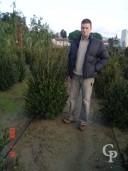 Buxus Sempervirens  Hedge  80cm