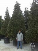 Magnolia Clt 750  500 550